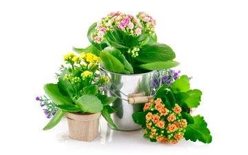 цветы, спальня, цветы, горшочки, pot flowers, комнатные