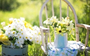 цветы, лето, сад, натюрморт, ромашек, цветы, маргаритки, летнее, still-life, деревянные стулья