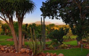 деревья, камни, пальмы, юар, кактусы, газон, south african national park