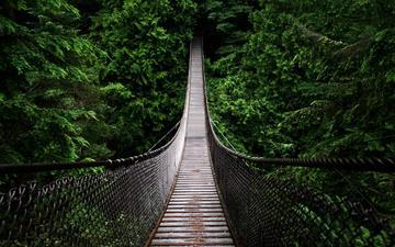 деревья, лес, мост, forest