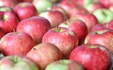 макро, фрукты, яблоки, плоды