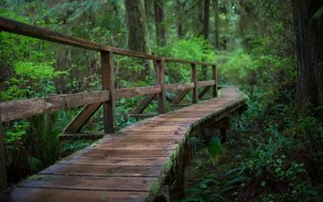 мостик, лес, мост, дождь
