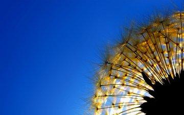 небо, природа, одуванчик, растение, былинка