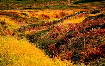 цветы, трава, япония, хоккайдо, ландшафт, asahidake