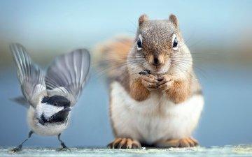 фото, птичка, белочка