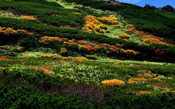 горы, камни, кусты, япония, ландшафт, растительность, asahidake