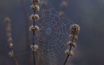 природа, макро, капли, дождь, растение, паутина