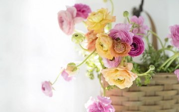 свет, цветы, фон, ранункулюс, лютик