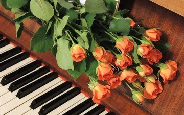 flowers, buds, roses, piano, a bouquet of flowers