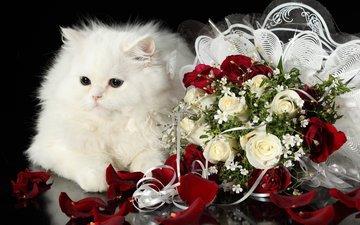 кот, розы, кошка, пушистый, белый, букет