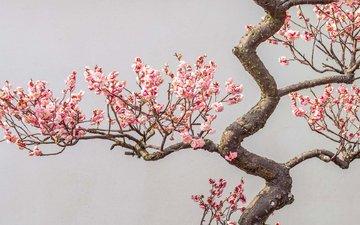 цветы, дерево, цветение, ветки, сад, весна, слива