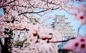 замок, пагода, япония, весна, дворец, сакура