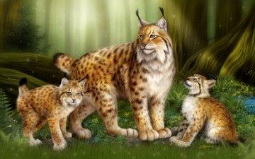 forest, children, cats, family, wild cats, mom, kittens, lynx