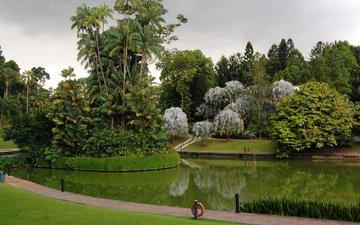 трава, деревья, дизайн, парк, пальмы, пруд, газон, сингапур, botanic gardens