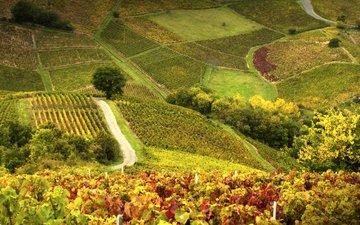 поле, склон, франция, холм, виноградник, божоле