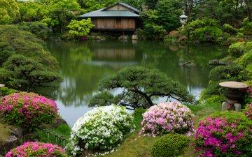 кусты, япония, сад, домик, пруд, азалии, рододендрон, кобе