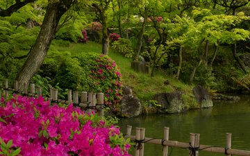 деревья, вода, парк, япония, сад, пруд, азалия, рододендрон, кобе