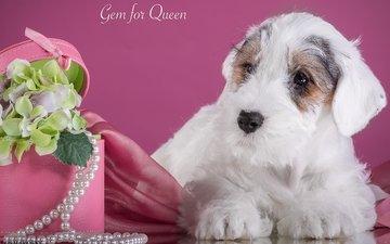 flowers, puppy, hydrangea, the sealyham terrier