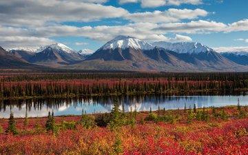 небо, облака, деревья, горы, лес, осень, сша, аляска
