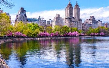 деревья, водоем, дома, сша, нью-йорк, весна, цветущие, центральный парк