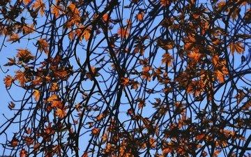 небо, листья, ветки, ветви, осень, осен, ветками, листья
