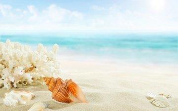 берег, море, песок, пляж, ракушки, голубая, морская звезда, рай, песка, seashells, летнее
