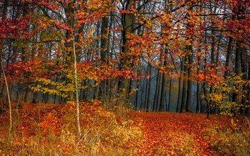деревья, лес, листва, осень, листопад, расцветка, деревь, опадают, осен, листья