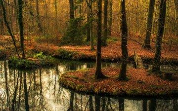 деревья, вода, лес, отражение, мост, осень, водоем, осен, заркало