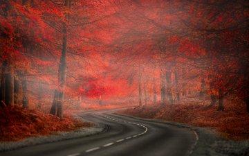 дорога, природа, лес, листья, туман, осень, краcный, автодорога, листья, nature. beauty