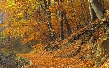 деревья, лес, листва, осень, тропинка, тропа, опадают, осен, листья