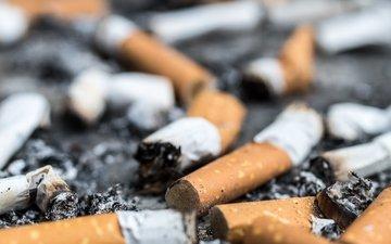 macro, cigarette, butts