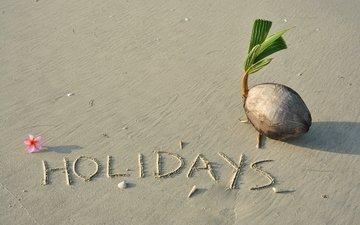 песок, пляж, кокос, песка, тропическая