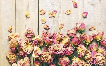 розы, лепестки, дерева, цветы, роз