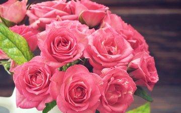 розы, розовые, окрас, крупным планом, роз, пинк