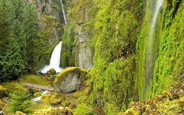 деревья, скалы, камни, зелень, мостик, ручей, водопад, тропинка, сша, мох, орегон, wahclella falls, columbia river