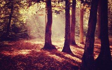 деревья, лес, листья, осень, деревь, осен, солнечный свет, листья, sunray