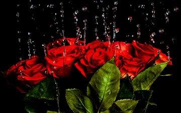 вода, капли, розы, красные, букет, краcный, роз