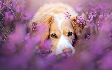 взгляд, собака, друг, spring is coming