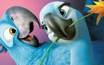 мультфильм, рио, комедия, рио 2, жемчужинка, голубчик