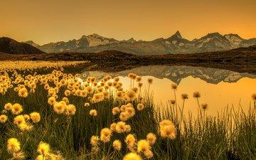 цветы, трава, озеро, горы, природа, отражение, пейзаж