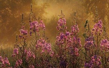 цветы, трава, растения, фокус камеры, макро