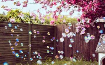 цветы, забор, весна, двор, мыльные пузыри