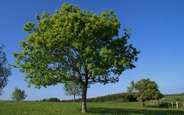 деревья, природа, поле, лето, деревь, на природе, летнее