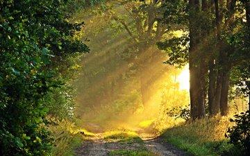 дорога, природа, лес, солнечные лучи