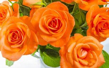 макро, розы, букет