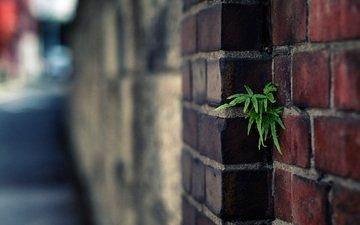 листья, макро, стена, кирпич, растение, кирпичи, боке