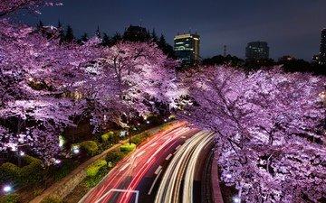 ночь, огни, цветение, город, япония, небоскребы, весна, сакура, токио, шоссе, цветущая сакура