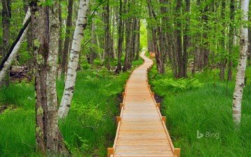 nature, forest, path, bing