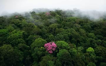 nature, forest, fog, jungle, bing, subtropics