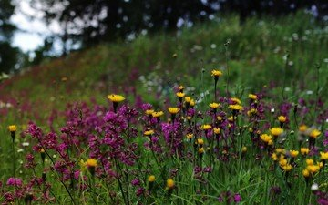 nature, wildflowers, finland
